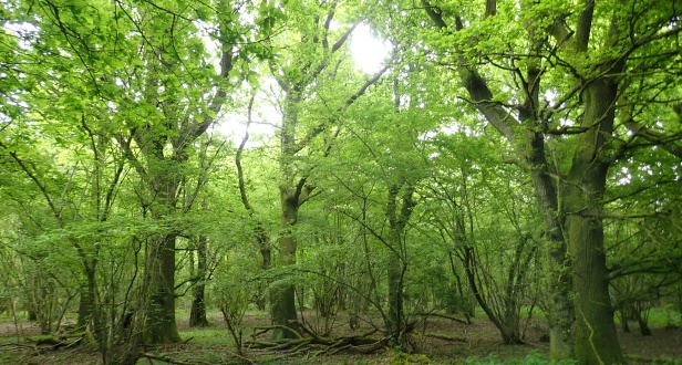 Northside Wood